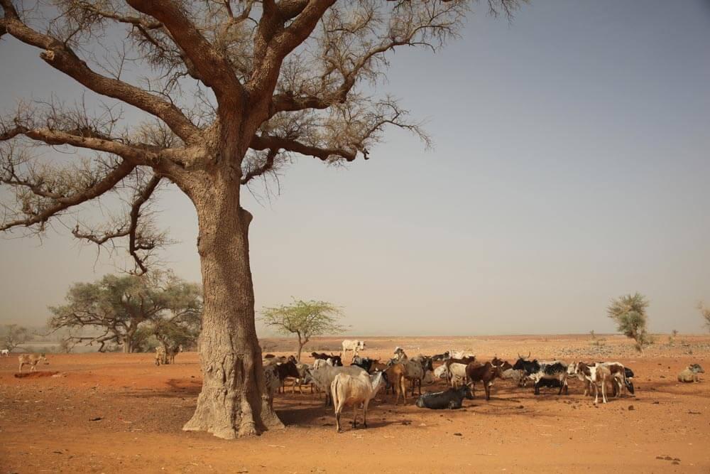 drought-in-ethiopia